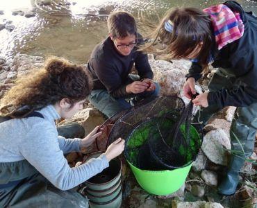 Revisión de ejemplares de anguila europea.