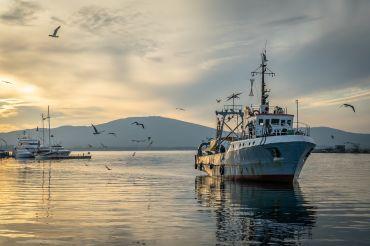 Flota buque pesquero